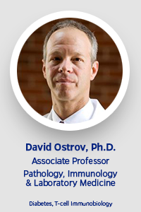 Faculty Template-Ostrov